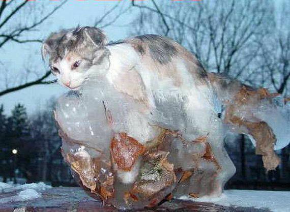 閲覧注意]あまりの寒さに生きていた時そのままの状態で凍りついて ...