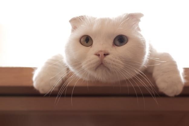 白のまん丸猫