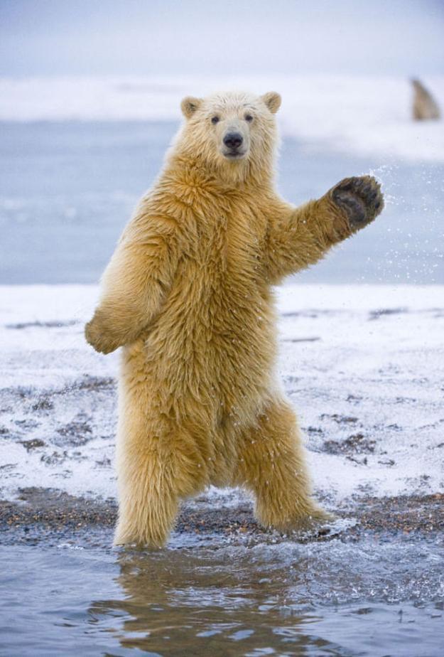 http://dnaimg.com/2012/10/02/get-your-groove-on-like-a-polar-go0/004.jpg
