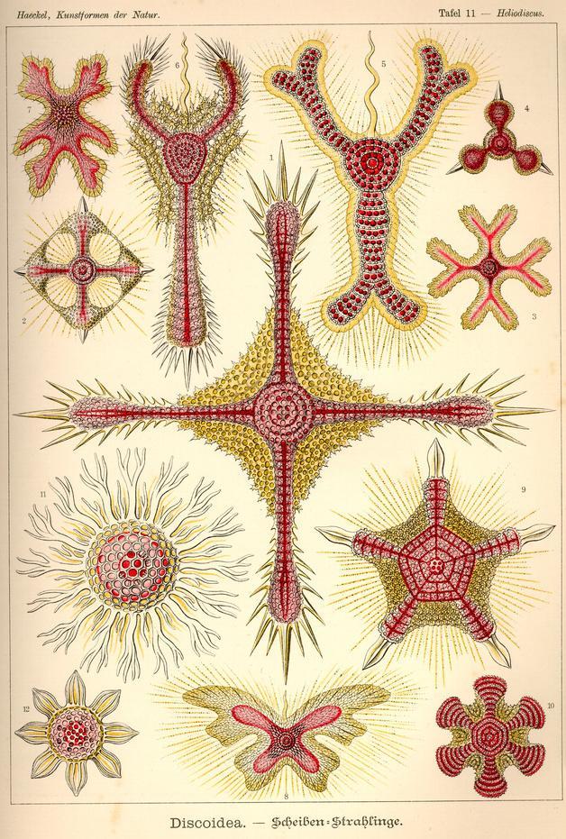 生物学者エルンストヘッケルが100年以上前に描いた芸術的に美しい生物