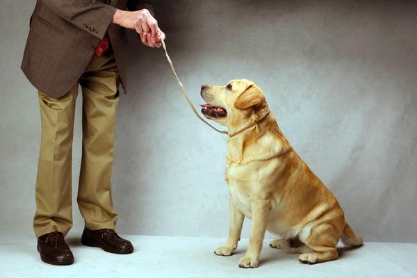 最強のチャンピオン犬を決める ...