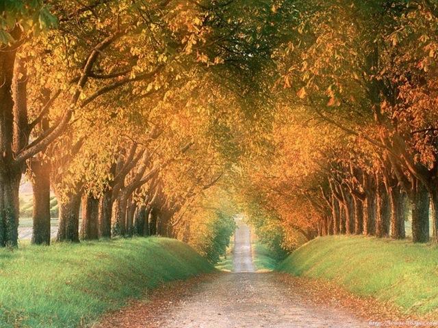 まるでおとぎの国のような幻想的な木のトンネル14選