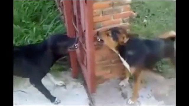 犬 同士 喧嘩