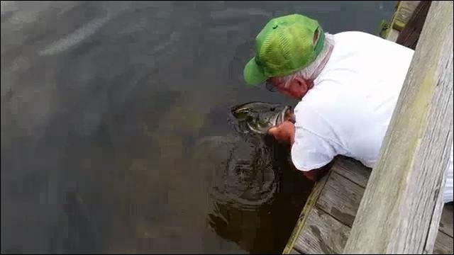 Dna for The fish whisperer