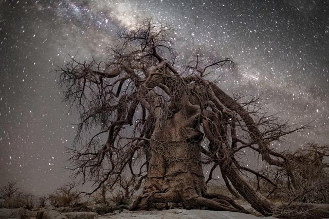 宇宙と融合した神秘的な古代樹が凄い、アフリカの大自然に古代から生きる巨大樹木の写真シリーズ「Diamond Nights」