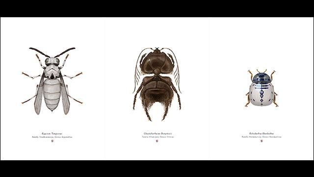 スターウォーズのキャラクターに擬態した美しき昆虫イラスト集insects