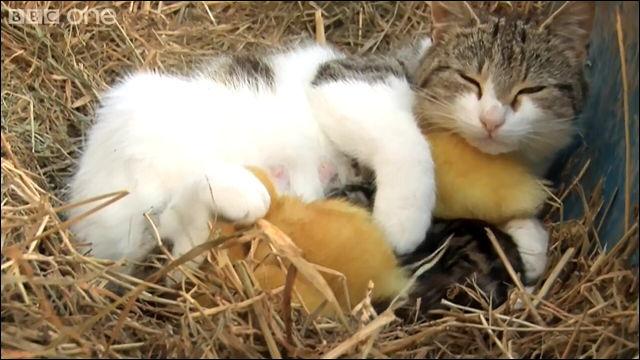 子ネコにちょっかいを出された母ネコが激怒する瞬間の動画